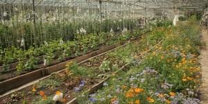 OL greenhouse